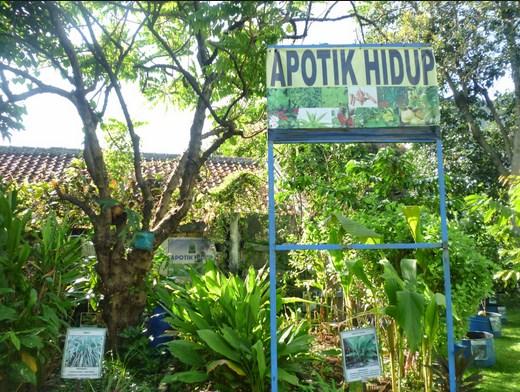 Cara Membuat Desain Taman Apotik Hidup Sederhana Tapi Indah