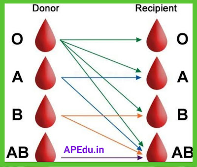 For Blood Group Donors Details