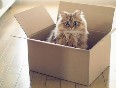 Nutrisi penting untuk kucing