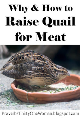 Why and How to Raise Quail for Meat