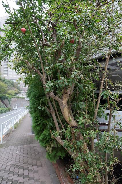 三田丘の上公園下