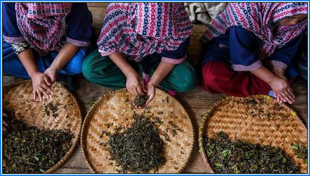 Jun Chiyabari Tea Estate, in the Dhankuta district of Nepal
