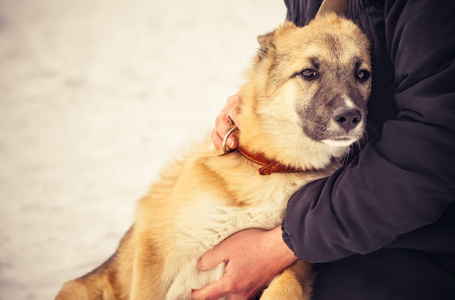 A German Shepherd puppy leans in to the arms of its homeless owner