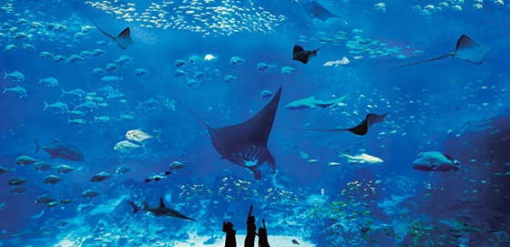 Tips Liburan dan Harga Tiket Sea Aquarium Singapore Terbaru