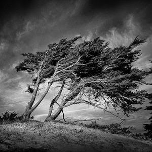 الشجرة والريح