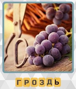600 слов на столе лежит гроздь винограда и ножницы 10 уровень