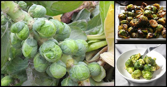 Enjoy Eating Brussels Sprouts And Reap Multiple Health Benefits