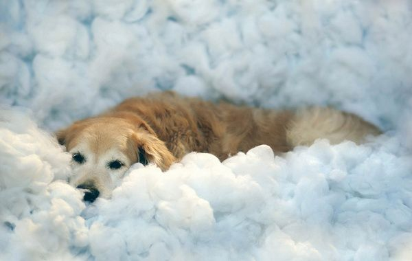Perro labrador y burbujas