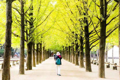 Must Visit Places in Seoul That You Won't Want to Miss