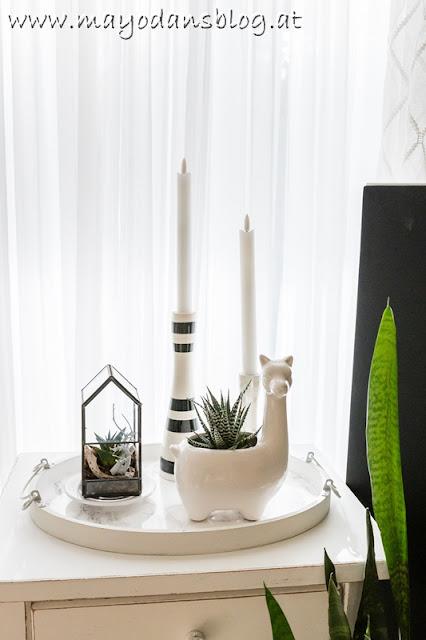 Zimmerpflanzen im Winter