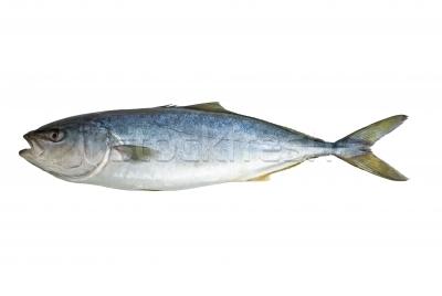 Fish R: Tuna Fish And ...
