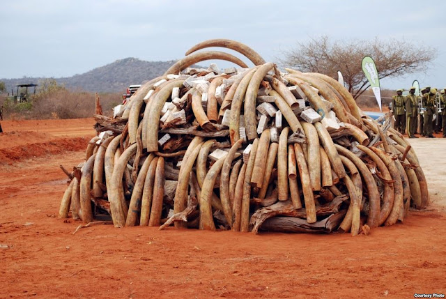 wildlife poaching and trafficking of endangered species alarming