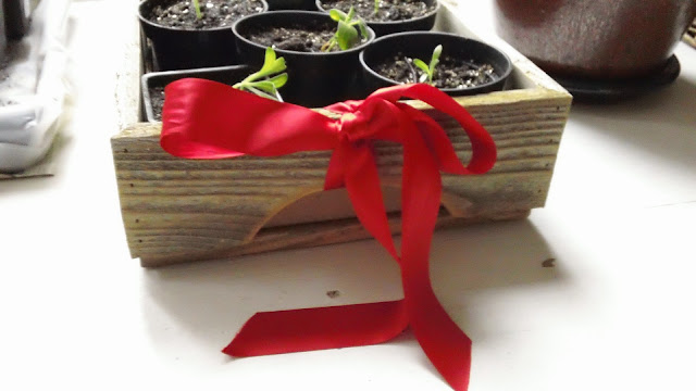 Business Clients Gift Ideas That Show Appreciation