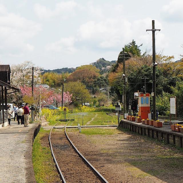 上総中野駅 桜 菜の花