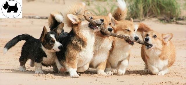 Cutest Dog Breeds, Best Dog, Dog