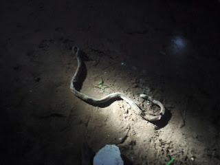 Futo students kill snake