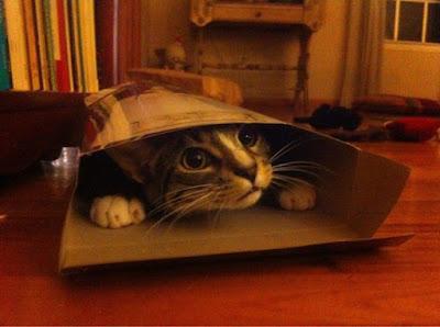 alasan kenapa kucing suka ngumpet di kardus