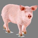 pig in spanish