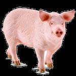 pig in spanish, list of animals in Spanish