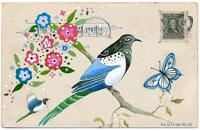 kuş illüstrasyonları
