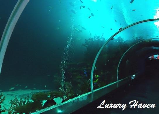 resort world sentosa sea aquarium tunnel