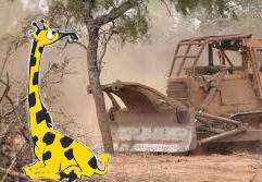 Cuento de amor por la naturaleza: La jirafa feliz