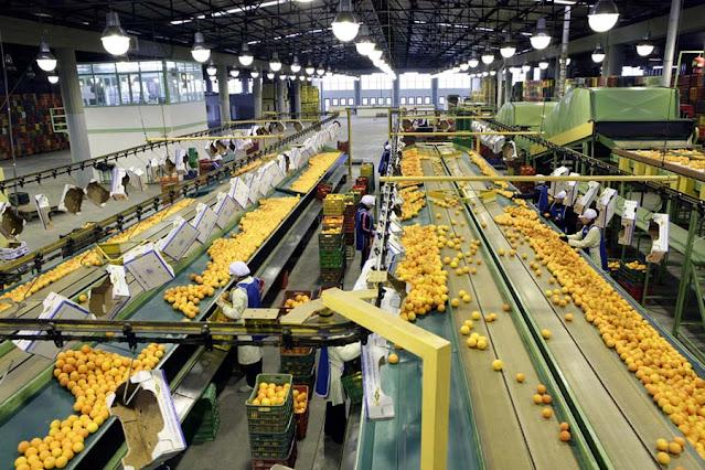 Συσκευαστήριο στο Ηραίο Αργολίδας ζητά συσκευάστριες και συσκευαστές για εποχιακή απασχόληση