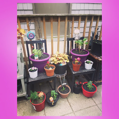 upcycled wooden chairs to build vertican space for container garden in urban porch garden