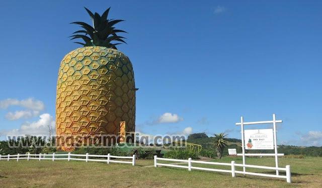 Tempat Wisata Unik Big Pineapple