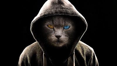 Hoodie Cat HD Wallpaper