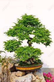 https://www.kakolib.com/2019/06/bonsai.html