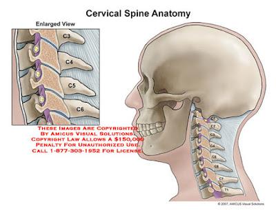 العمود الفقري العنقي (The Cervical Spine)