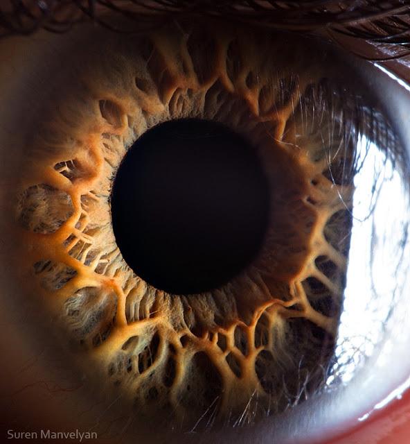 Olho humano fotografado de perto