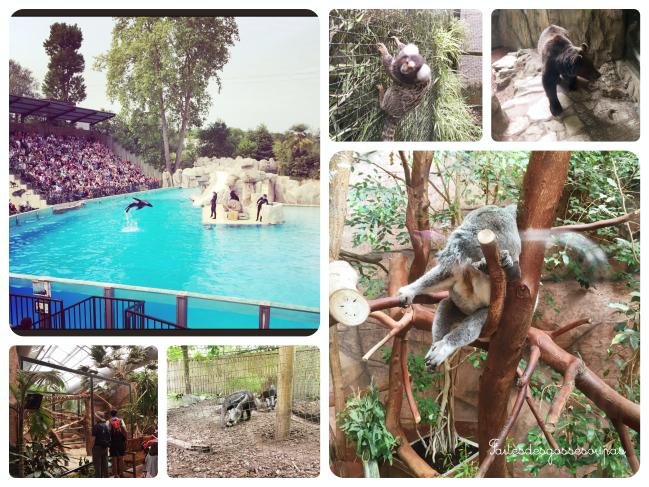 Notre fabuleux week end en famille au zoo de beauval for Chambre zoo de beauval