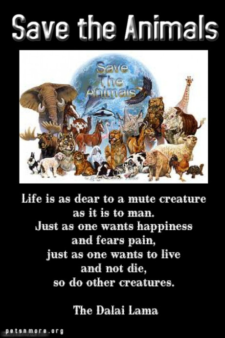Save Animal Quotes