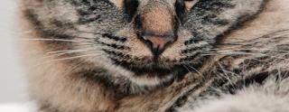 gambar kumis kucing