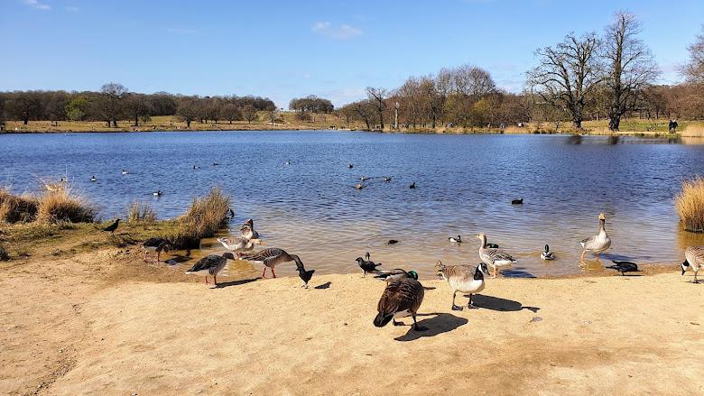 里士滿公園 Richmond Park  內的湖泊