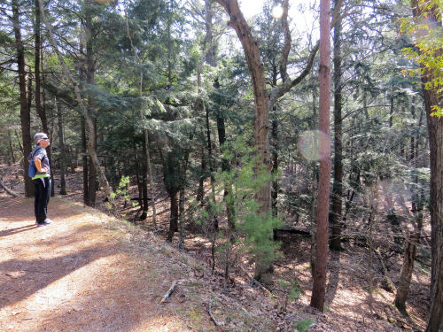 Ludington State Park Logging Trail