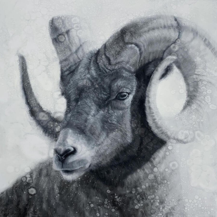 07-Bighorn-Sheep-David-Riley-www-designstack-co