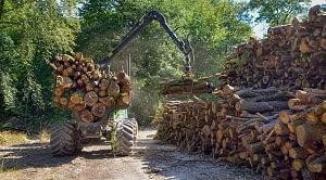 Rencana Pengelolaan Hutan dapat dibedakan menjadi 3 bagian yaitu RPHJP, RPHJM, dan RPHJPd. RPHJP memiliki batas waktu pengelolaan 10 sampai 20 tahun, RPHJM dengan batas waktu pengelolaan 3 sampai 5 tahun, dan RPHJPd dengan batas waktu 1 tahun.