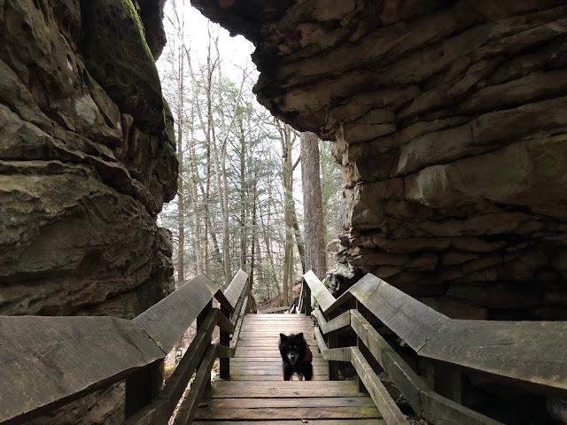 dog on boardwalk between boulders