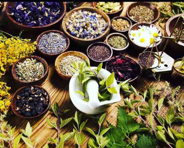 Top 5 herbs that ancient Greece used