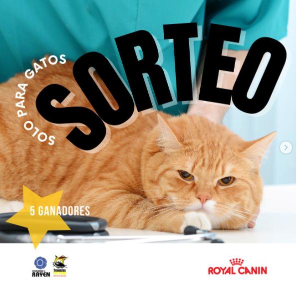 Gana consultas gratis al veterinario