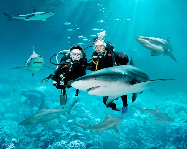 Trải nghiệm thú vị - Bơi cùng cá mập tại S.E.A Aquarium