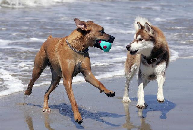 Η αλληλεγγύη μεταξύ των σκύλων. Τι αισθάνονται όταν υποφέρει το αφεντικό τους ή ένας άλλος σκύλος