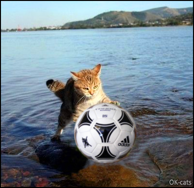 Photoshopped Cat picture • Cat playing fetch with a soccer ball. Summer time and fun games for cats too