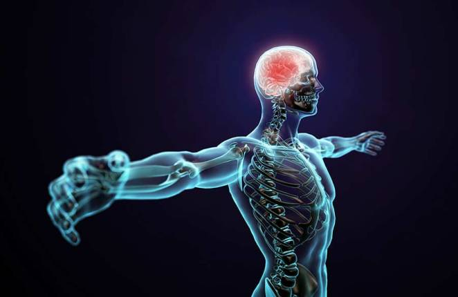10 Amazing Facts about human body that'll surprise you