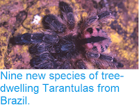 http://sciencythoughts.blogspot.co.uk/2012/11/nine-new-species-of-tree-dwelling.html