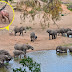 It Was Just An Ordinary Elephant Herd – Until He Spots THIS Behind Mom!