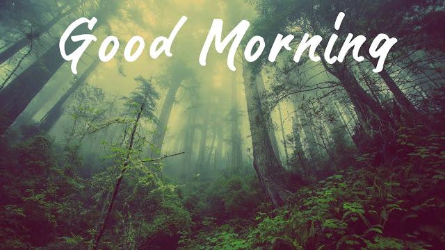 good morning hd images happy sunday